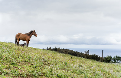 Horse and Goat | Big Island, Hawaii