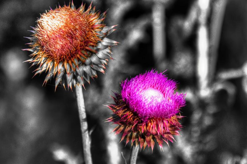 Purple flower,  Lake Renwick Preserve, Plainfield, Illinois