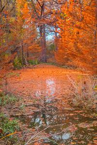 Autumn at Hamilton Pool