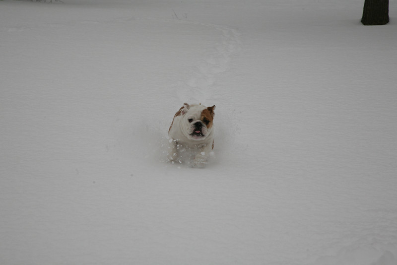 charlie runs in snow