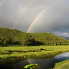 Hawaiian Marsh Rainbow