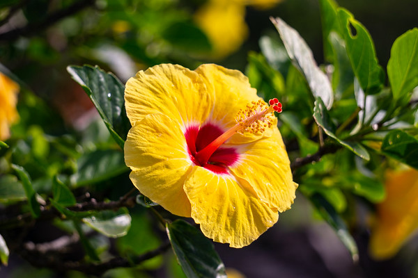 Flowers // Hawaii Orchids Hibiscus