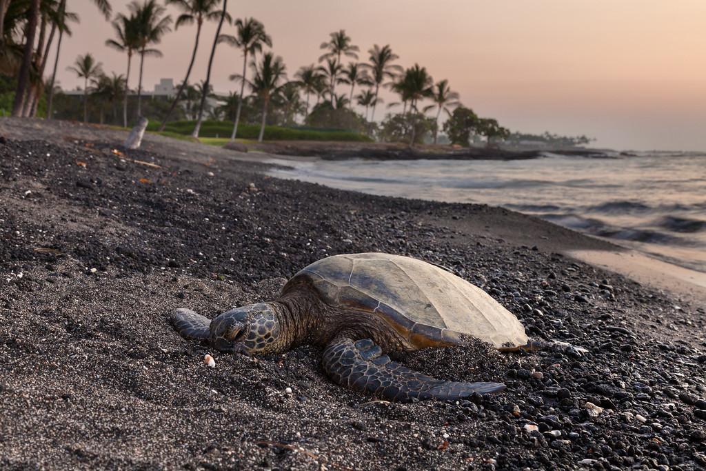 Lazy Turtle