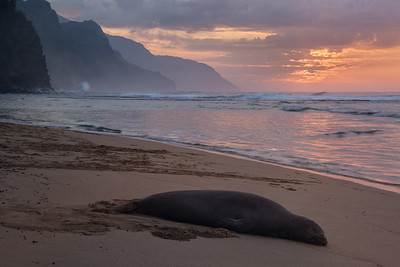 Basking In The Glow, Ke'e Beach, Kauai, Hawaii