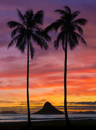 sunset in Oahu with palm trees and chinaman hat