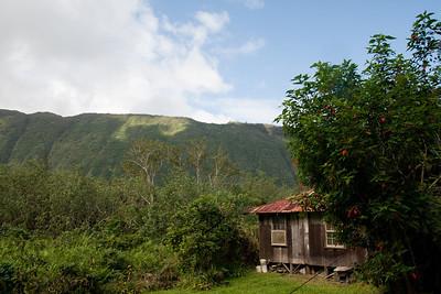 Waipio House
