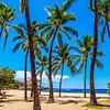 "Coconut Palm Trees on Hulopo""e Beach"