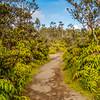 Hawaii Volcanoes National Park Path