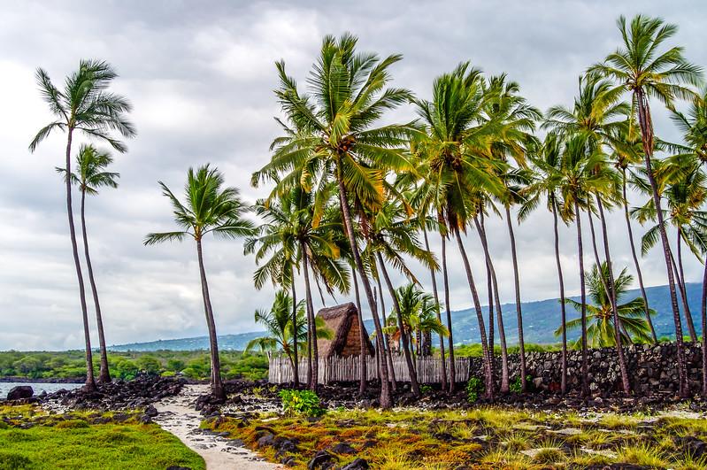 Tiki Hut Under Coconut Palm Trees