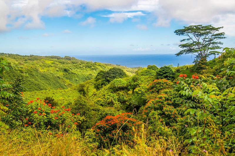 The Road to Hana Landscape