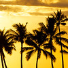 Palm Tree Silhouettes in the Sunset