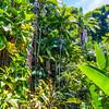 Jungle Scene