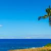 Lone Palm Tree on a Beach in Hawaii
