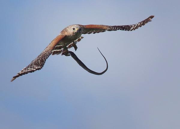 high flying breakfast.