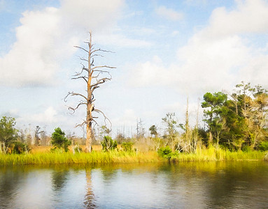 cape fear backwater