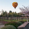 Hot Air Balloon Over Napa