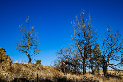 Charred Trees Against a Blue Sky ~ Fishtrap Recreation Area, Washington