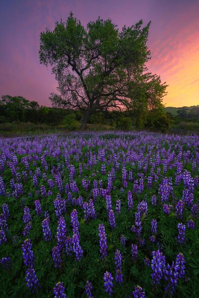 Violet Visions