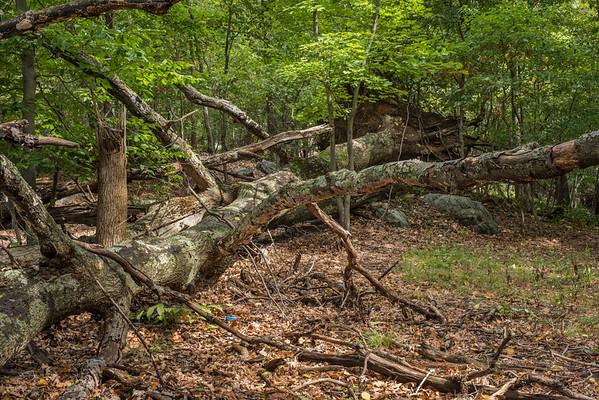 Hillside Woods
