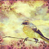 Little Vintage Songbird