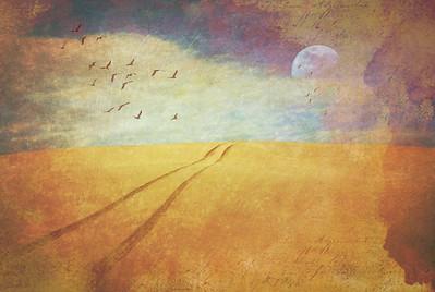 Tales of a Desert Moon