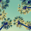 Retro Summer Palms