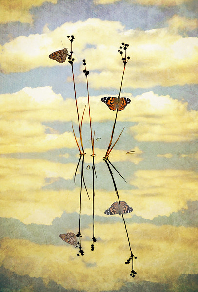 Vintage Butterfly Reflections