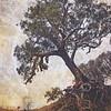 Grunge Gully Gumtree