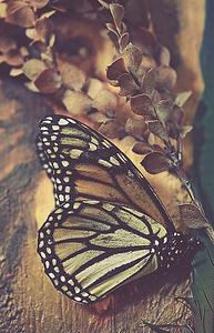 Natural Curiosities I