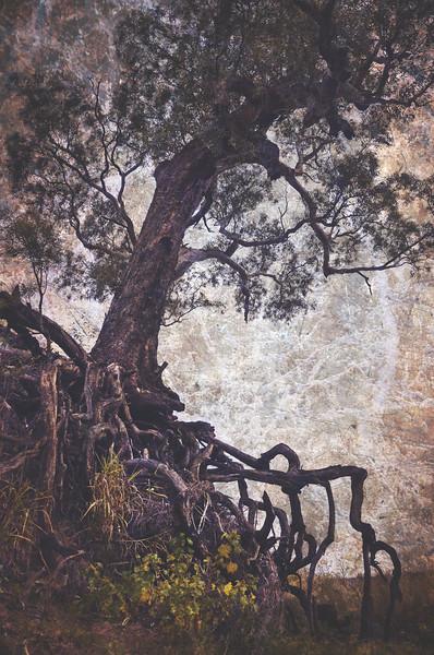 The Tangle Tree