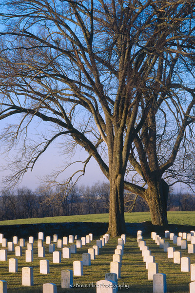 S.3531 - morning light on cemetery, Camp Nelson National Cemetery, Nicholasville, KY.