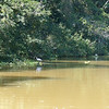 Costa Rica - Ecoboat ride - Video