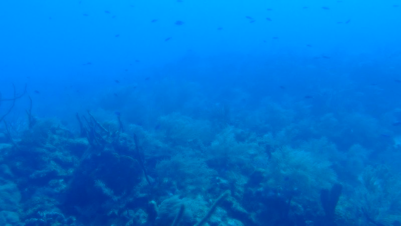 Grand Cayman - Submarine underwater  - Video