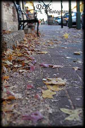 Leaves on Cobblestone Street