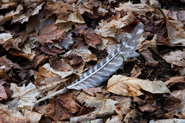 Feather in the woods