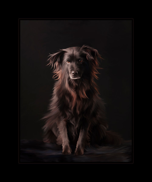 Dog Portrait of Noir, Painted