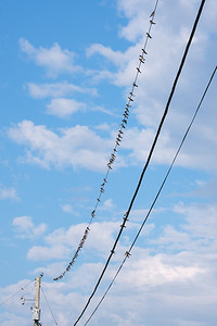 Swallows on a line