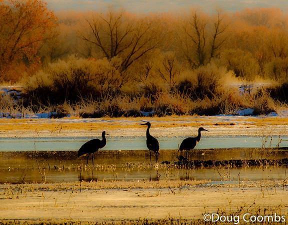 Three Cranes