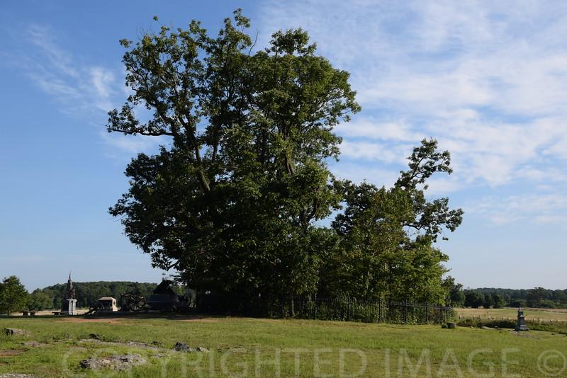 Clump of Trees at Gettysburg Battlefield
