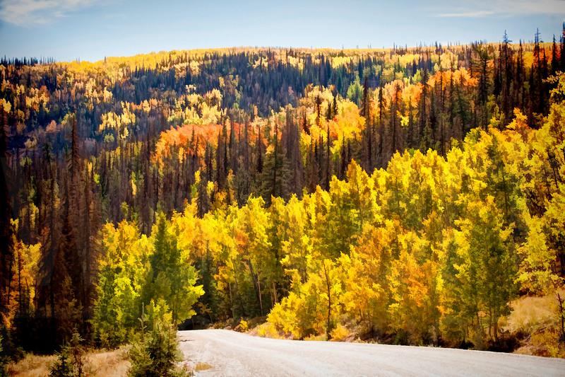 Colorado Fall Foliage 036   Wall Art Resource