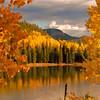 Colorado Fall Foliage 006   Wall Art Resource