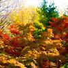 Colorado Fall Foliage 022 | Wall Art Resource