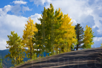 Colorado Fall Foliage 030 | Wall Art Resource