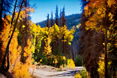 Colorado Fall Foliage 032 | Wall Art Resource