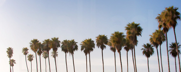 Group Of Palm Trees 002 | Wall Art Resource
