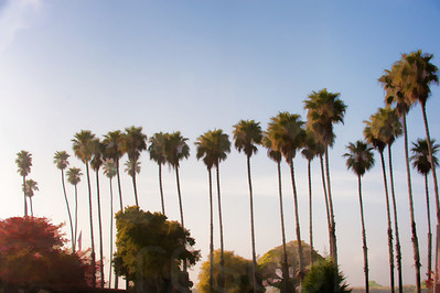 Group Of Palm Trees 001 | Wall Art Resource