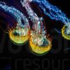 Glowing Jellyfish 004 | Wall Art Resource
