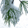 Snowy Branches 003 | Wall Art Resource