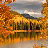 Colorado Fall Foliage 005   Wall Art Resource