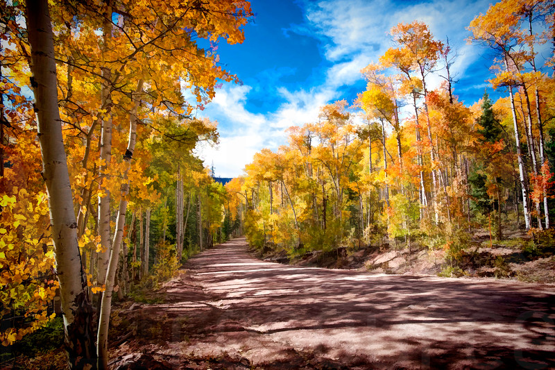 Colorado Fall Foliage 040 | Wall Art Resource